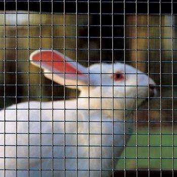 Крольчатники - кролики.jpg