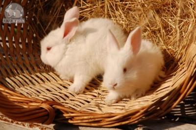 Ноу-Хау кролиководства – в Украине  - 1.JPG