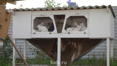 Кролики-акселераты, Мини-фермы - DSC00190.JPG
