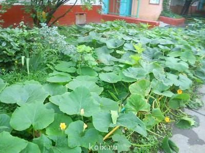Бурная растительность - IMG_20120905_101608.jpg
